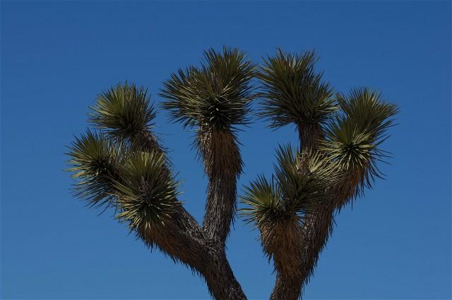 Il selvaggio Joshua Tree National Park è a ovest di Palm Springs e si raggiunge percorrendo la Yucca Valley lungo la Highway 62.