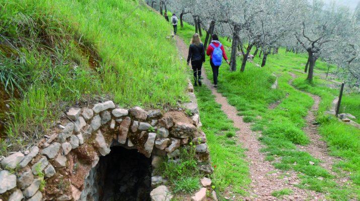 Foto Il 29 ottobre, a passeggio tra gli olivi