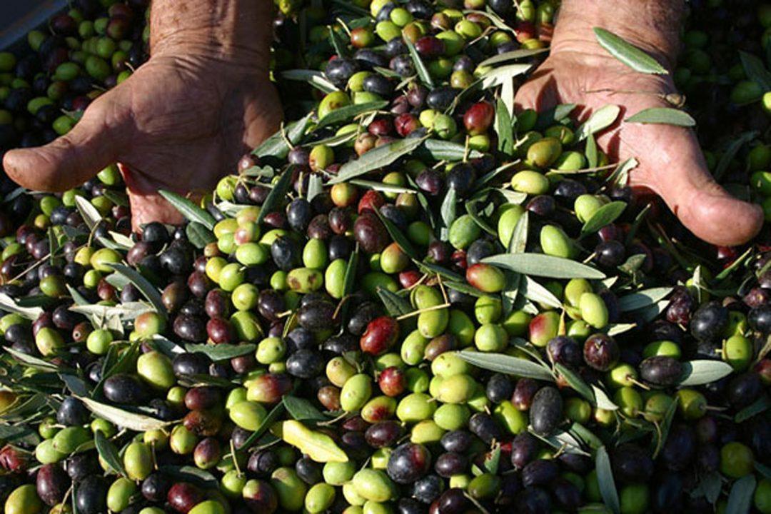 Il 29 ottobre, a passeggio tra gli olivi