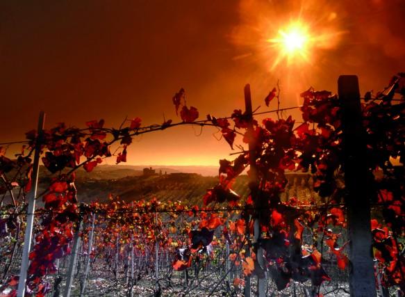 Tra le colline con le vigne colorate dall'autunno si dipana la Strada del Barolo, percorso segnalato che tocca le cantine produttrici e le aziende agricole del grande vino. La Strada unisce i molti comuni a vocazione vincola, tra cui Grinzane Cavour, Alba, Barolo, Cherasco, Dogliani, La Morra, Monchiero, Monforte d'Alba, Roddi, Serralunga d'Alba, Verduno.