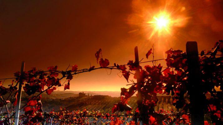 Foto Langhe e Roero: grandi sapori tra le vigne