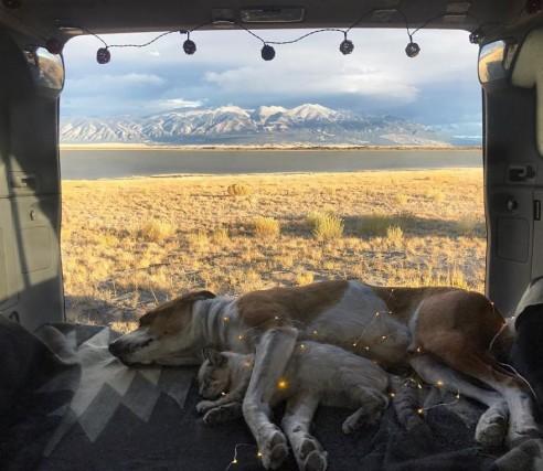 Il viaggio del cane Henry e del gatto Baloo