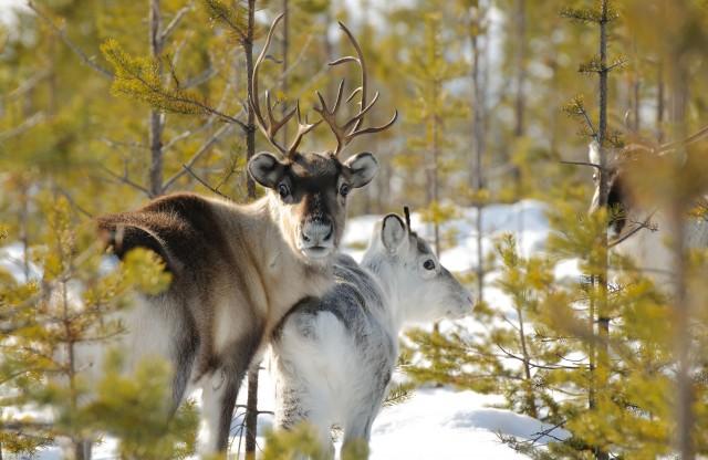 Svezia: alloSvansele Wilderness Centre, tra natura e animali (ph Johannes Holmlund)