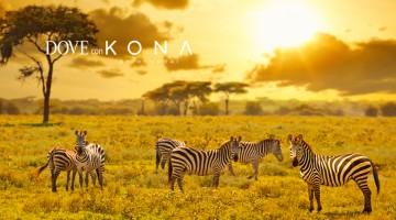 Tanzania-Tappo-Native-1000×501