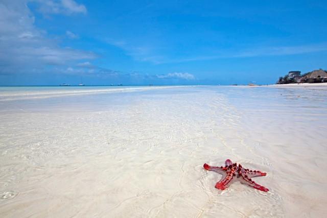 Attorno a Unguja, l'isola principale, i fondali sono ricchi di coralli, stelle marine, spugne e peschi colorati.