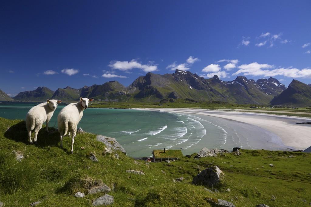 Alla scoperta delle Isole Lofoten