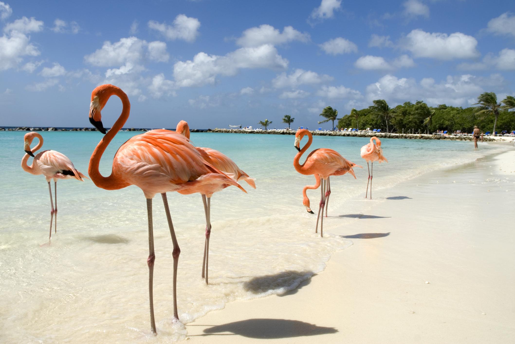 """Isola di Aruba: consigli per vivere i Caraibi """"like a local"""""""