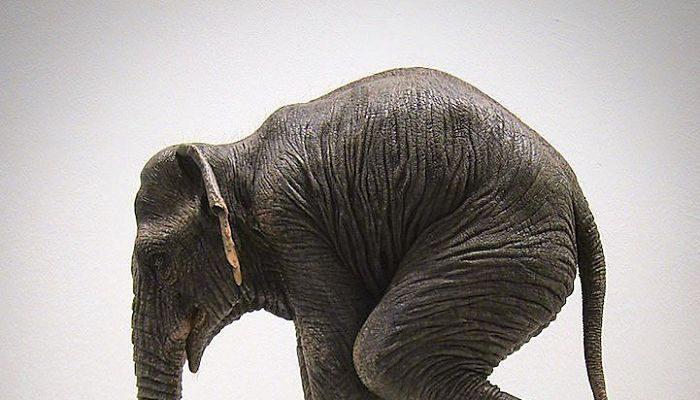 Foto Le (assurde) sculture che sfidano la gravità