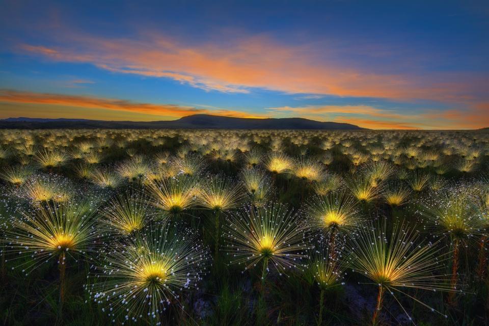 Le foto di giardini più belle del mondo