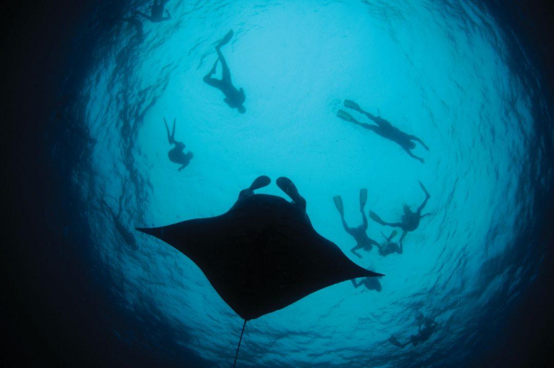 Maldive, cartoline dal profondo blu