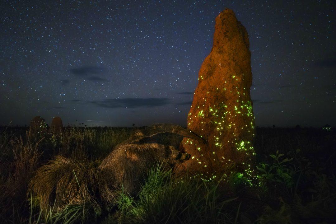 Le più belle immagini del Wildlife Photographer of the Year 2018