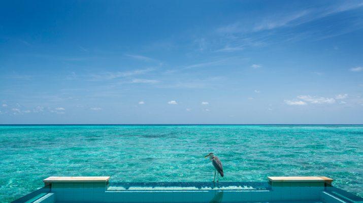 Foto Maldive, cartoline dal profondo blu