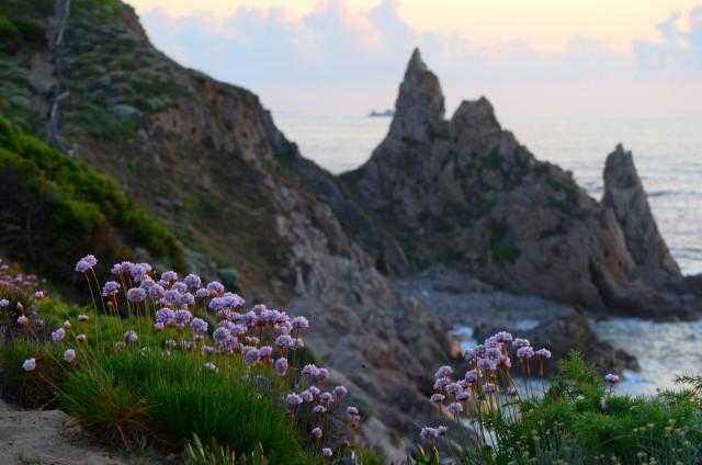 Giardino Pietra Rossa Sardegna : 15 feste dei fiori da non perdere in primavera gallery immagine