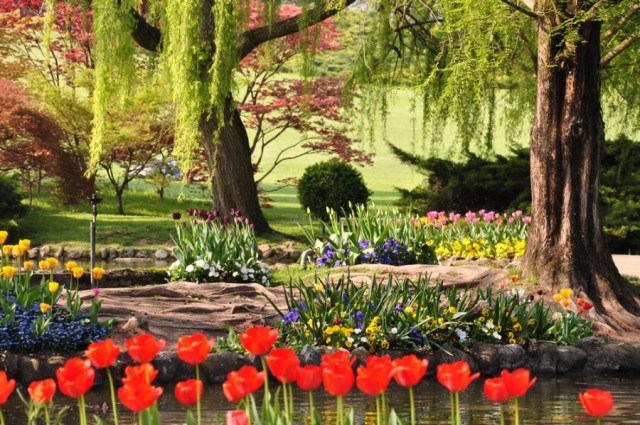 15 feste dei fiori da non perdere in Primavera