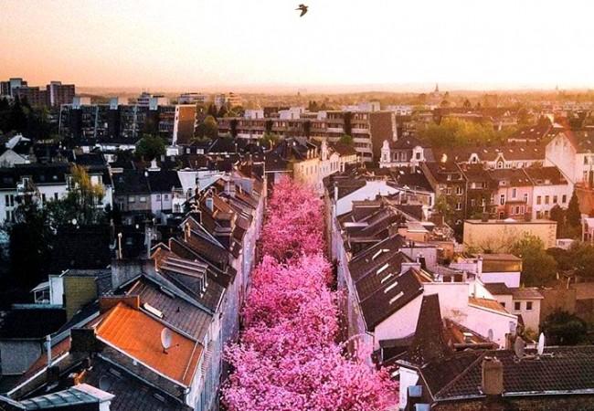 Citt in fiore in italia e in europa ecco dove ammirarle for Citta romantiche europa