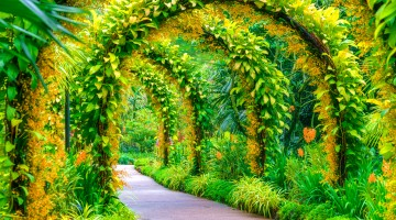 green arcs made of tropical plants above pedestrian pathway in Singapore Botanical garden