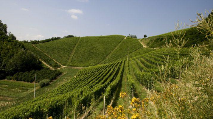 Foto Le tappe del Wine Trekking di Ceretto