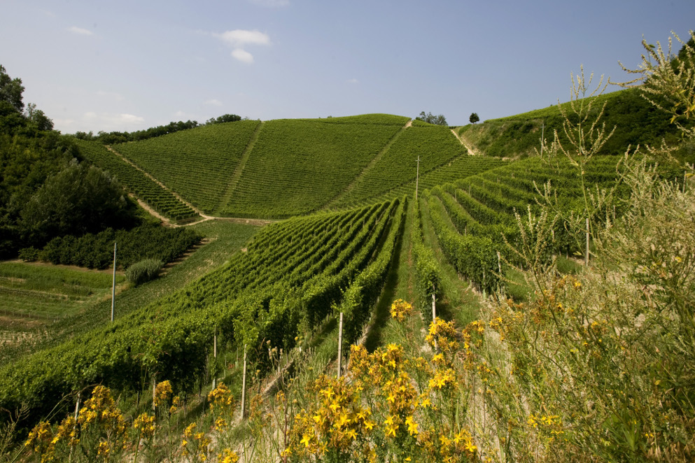 Le tappe del Wine Trekking di Ceretto