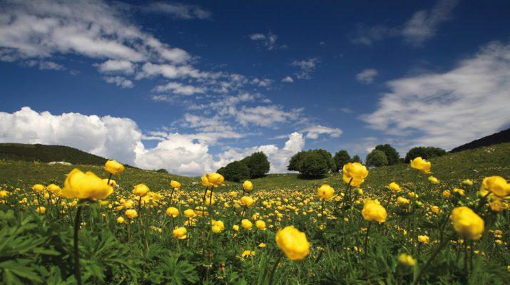 Foto La Valle dell'Adige: un territorio da scoprire
