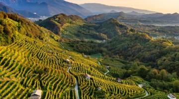 Paesaggio del Conegliano Valdobbiadene Prosecco_photo credits Arcangelo Piai_2
