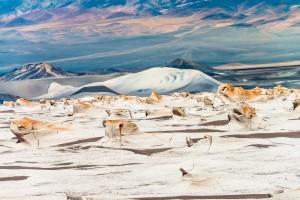 Puna argentina: il magico deserto tra le Ande