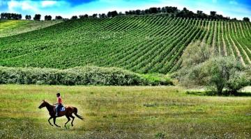15.Montebelli Agriturismo e Country Hotel –  Galoppo
