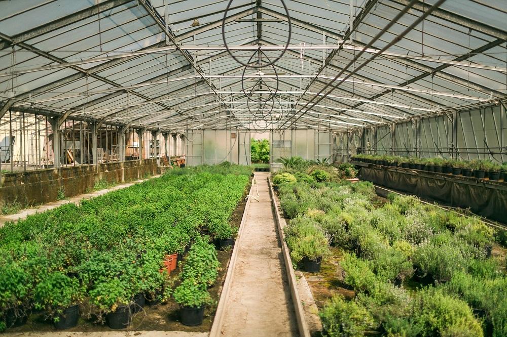 Le fattorie del benessere in Lombardia