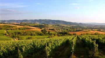 Le colline ricoperte di vigneti  attorno a Torgiano.