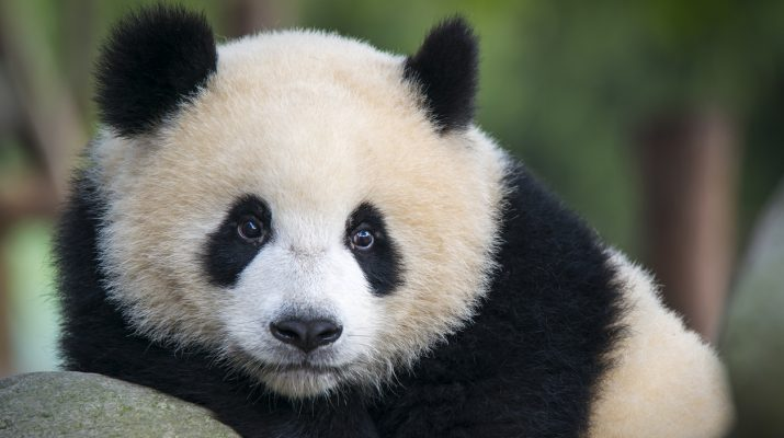 Foto 10 viaggi per chi ama gli animali
