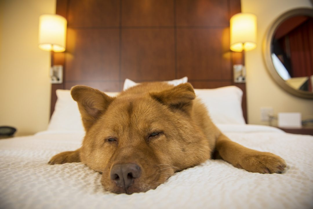 Dieci hotel pet friendly