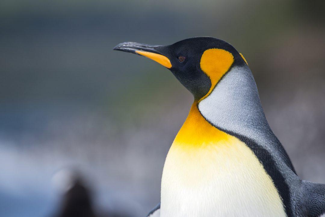 10 viaggi per chi ama gli animali