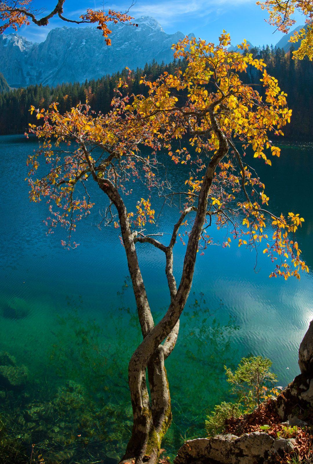 Le più belle foreste d'Italia