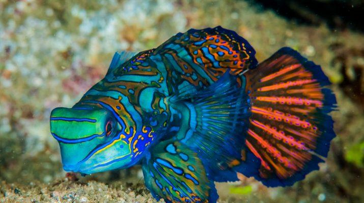 Foto Paese che vai, animale marino che trovi