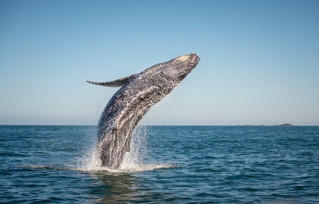 Paese che vai, animale marino che trovi