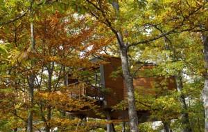 12 tree house per ammirare il foliage autunnale