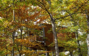 12 tree house per ammirare il foliage autunnale
