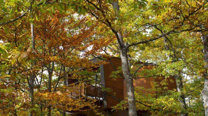 Foto 12 tree house per ammirare il foliage autunnale