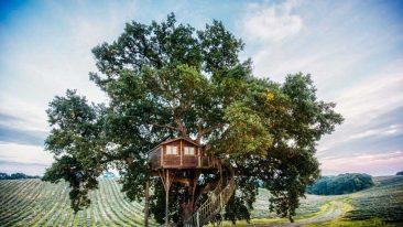 Case sugli alberi per ammirare il foliage