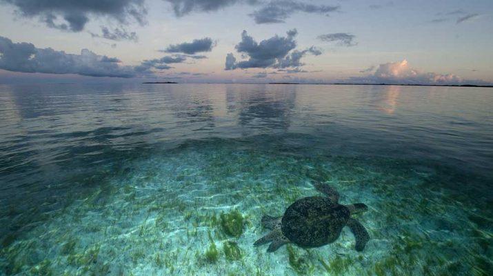 Foto Wildlife: le 20 immagini più belle in mostra