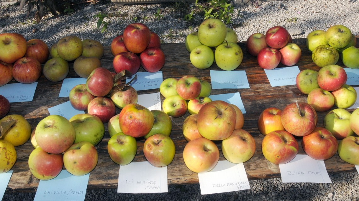 Slow Food: i nuovi presìdi che debuttano al Salone del Gusto