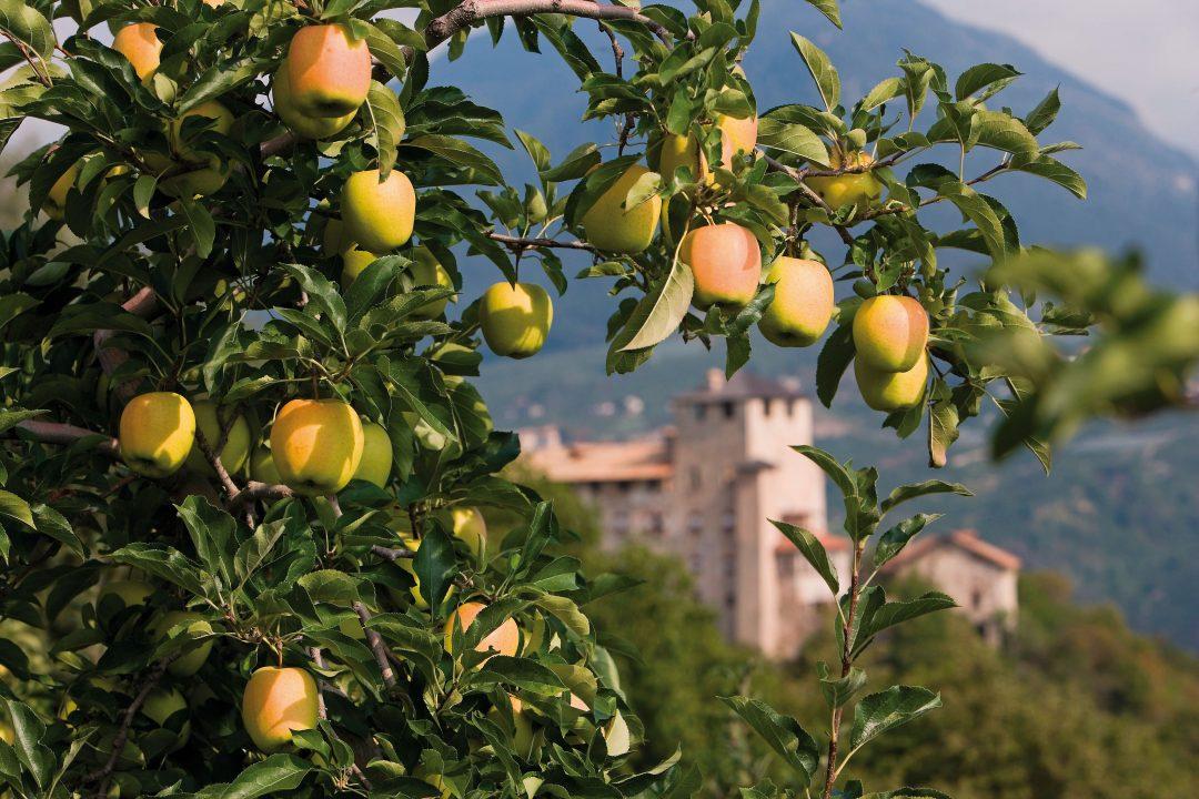 Italia: autunno di sagre