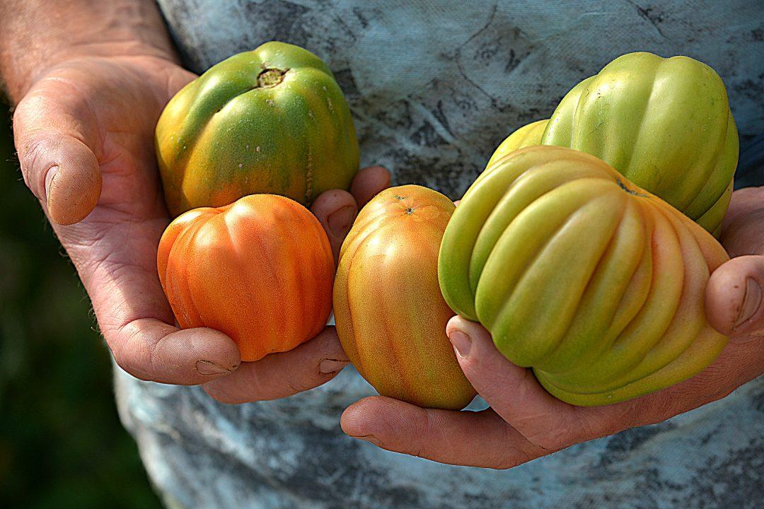 Giro del mondo con i nuovi presìdi Slow Food