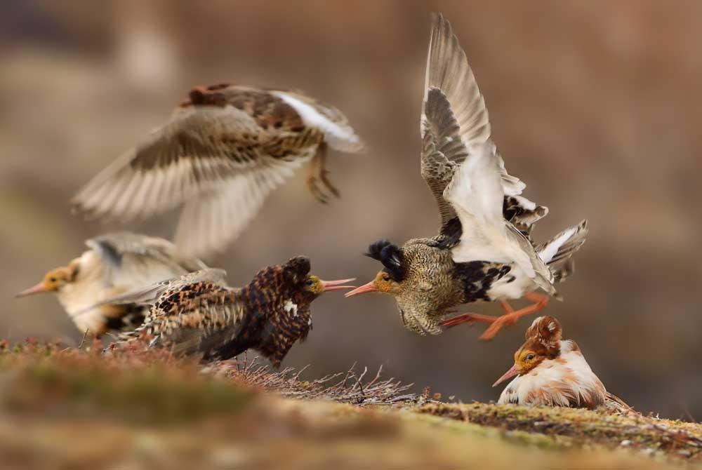 Wildlife: le 20 immagini più belle in mostra