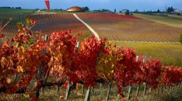 lunelli-TenutaCastelbuono-vigne-in-autunno