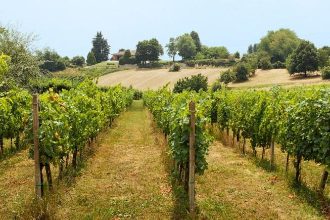 strada del vino san colombano lodigiano