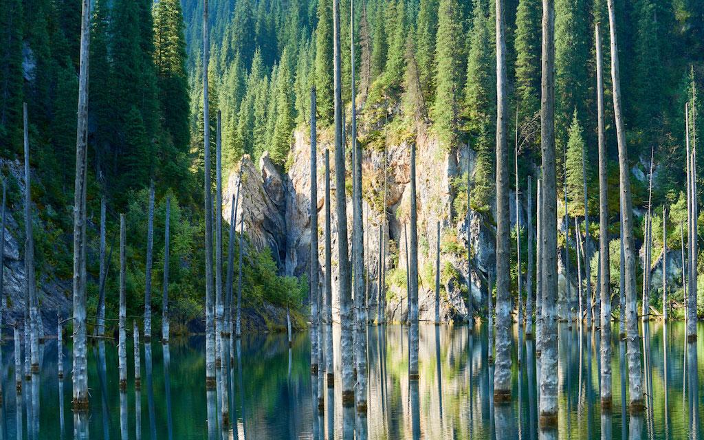 Kazakistan: la spettacolare foresta sommersa del Lago Kaindy
