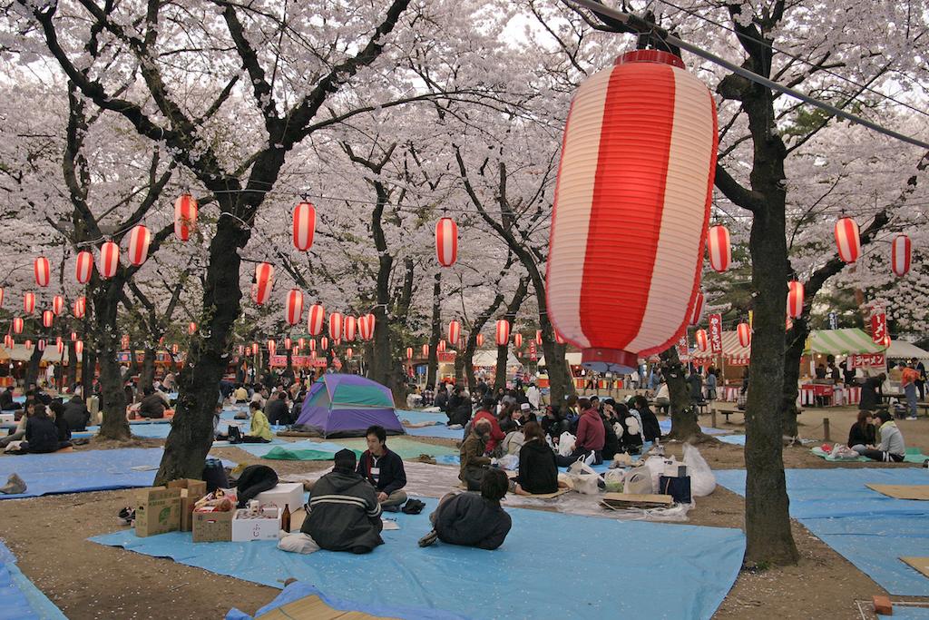 Ciliegi in fiore: dove e quando vederli in Giappone