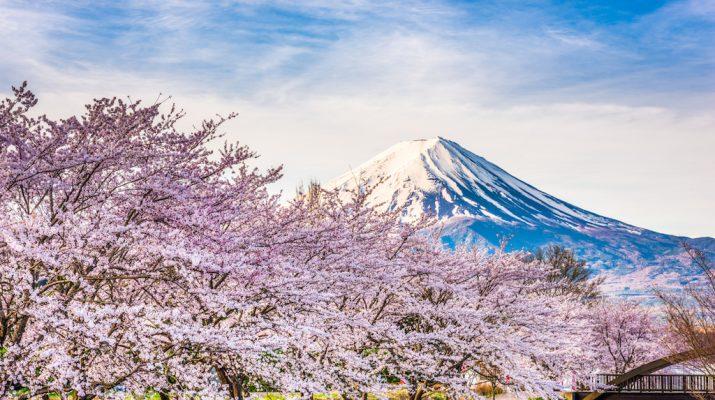 Foto Ciliegi in fiore: dove e quando vederli in Giappone
