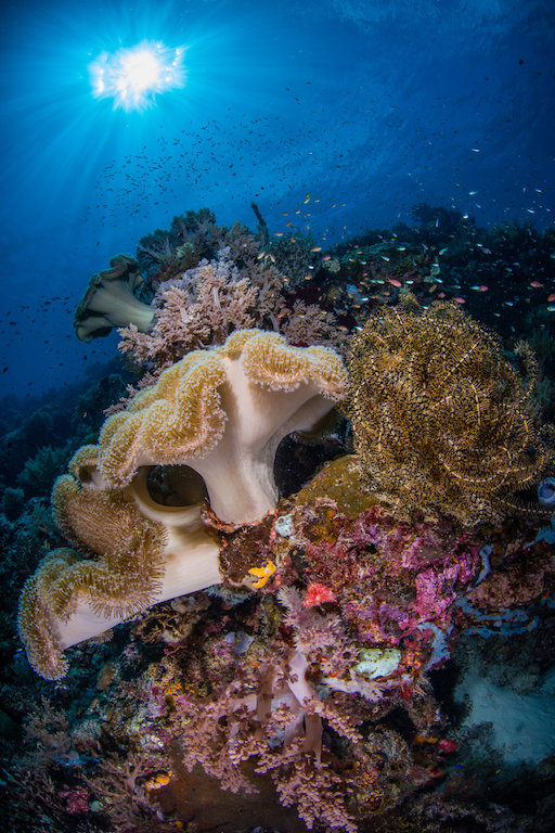 Ritratti (magnifici) dal fondo del mare