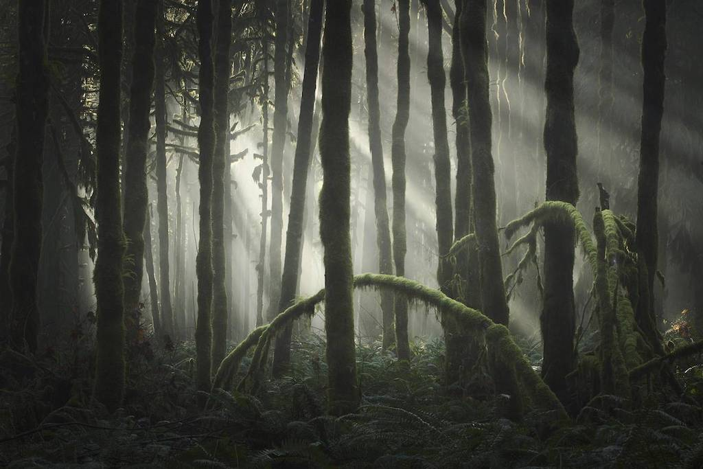 Le più belle foto di Natura: Landscape Photographer of the Year